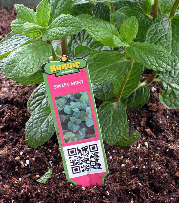 QR code in gardens